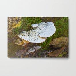 White Fungi Metal Print