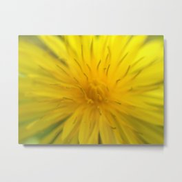 Lion's Tooth Metal Print