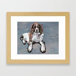Springer Spaniel Framed Art Print