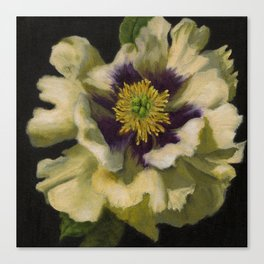 Radiant Tree Peony Canvas Print