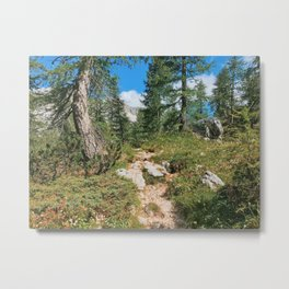 Path through the mountain forest Metal Print