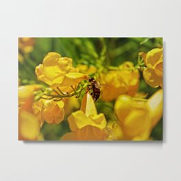 bee flowers Metal Print