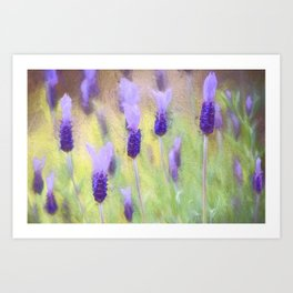 Lavender 10 Art Print