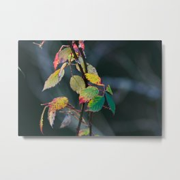 Autumn Aquarelle on the Canvas of Winter Metal Print