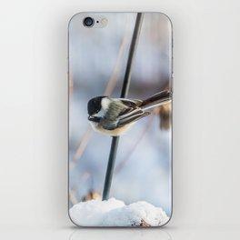 Chickadee waiting iPhone Skin