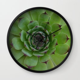 Houseleek (Sempervivum) Photo with purple tips viewed from the top dow Wall Clock