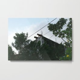 Roof dogs. Metal Print