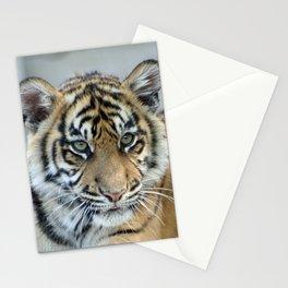 Tiger_011_by_JAMFoto Stationery Cards