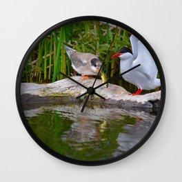 Baby Arctic Tern Feeding Wall Clock
