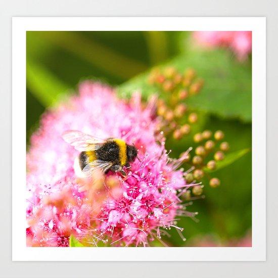 Busy Bee Bzzzzzzz Art Print