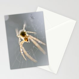 Little Spider Stationery Cards