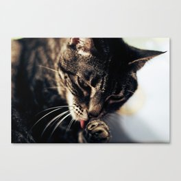 Cat Grooming Canvas Print