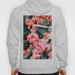 closeup blooming red cactus flower texture background Hoody