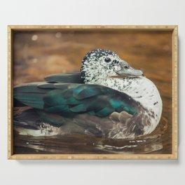 Knob-billed Duck Serving Tray