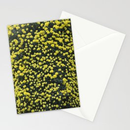 Longwood Gardens Autumn Series 277 Stationery Cards