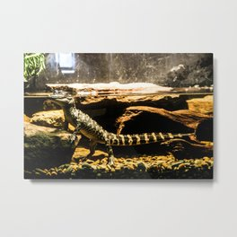 An America Alligator Metal Print