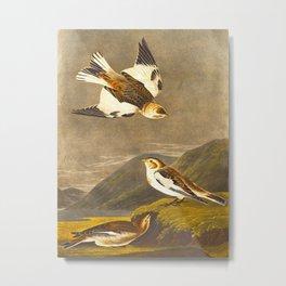 Snow Bunting Bird Metal Print