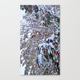 Snow on Fall Leaves 2 Canvas Print