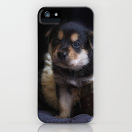 Australian kelpie puppy iPhone Case