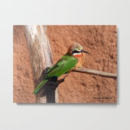 White-fronted Bee-eaters Metal Print