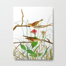 Savannah Finch Bird Metal Print