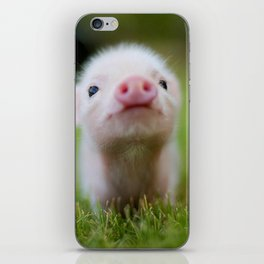 Little Pig iPhone Skin