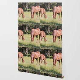 Horses feeding in a field Wallpaper