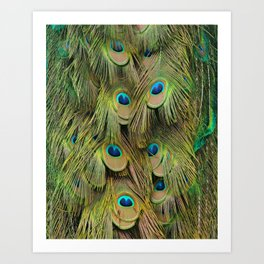 Peacock Iridescent Green Tail Feathers Art Print