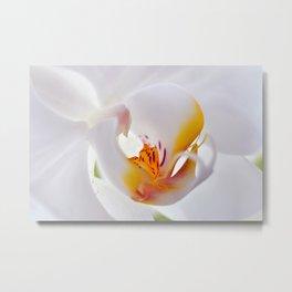 Orchid white macro 055 Metal Print