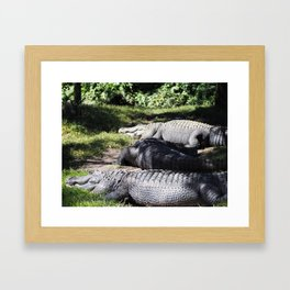 Lounging Gators Framed Art Print
