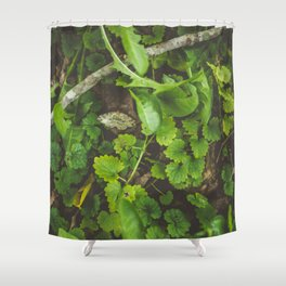 Only Shower Curtain