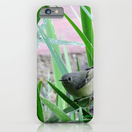 Kinglet Approaching iPhone Case