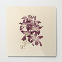 R. Warner & B.S. Williams - The Orchid Album - vol 01 - plate 049 Metal Print