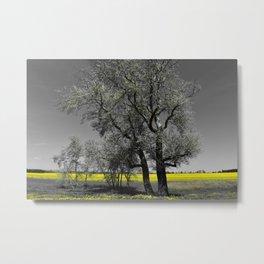 The Beauty of Canola Fields Metal Print