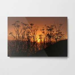 Sunset Over the Fennel Metal Print
