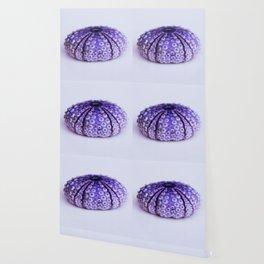 purple urchin Wallpaper