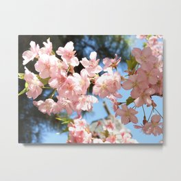 Pink Cherry Blossoms 2 Metal Print