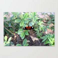 Butterfly Red Canvas Print