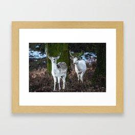 Deers of the Woods Framed Art Print