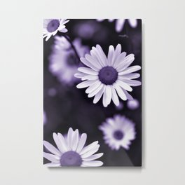 Daisy Wildflowers - Cheers Metal Print
