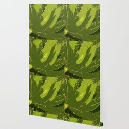 Sawtooth Leafed Aloe Vera Wallpaper