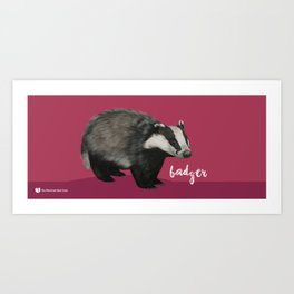 European Badger Art Print