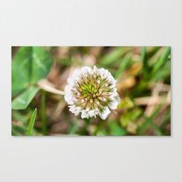 White Clover Flower (Macro) Canvas Print
