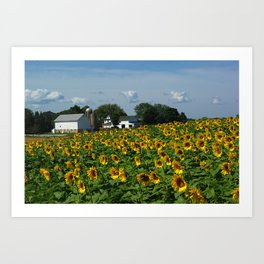 Sunflower Farm  - Pope Farm Conservancy, Wisconsin Art Print