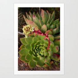 Baja: Succulent Art Print