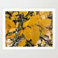 Yellow Leaves of Autumn Art Print