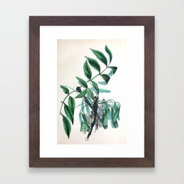"""The Ash, from """"The Spirit of the Woods,"""" 1849 (benefiting the Arbor Day Foundation) Framed Art Print"""