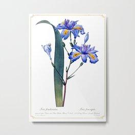 Iris fimbriata Metal Print