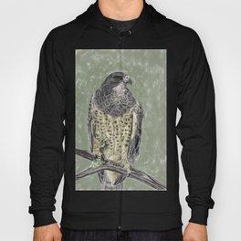Black-chested buzzard-eagle (Geranoaetus melanoleucus) Hoody