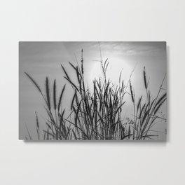 Pampas grass sunset Metal Print